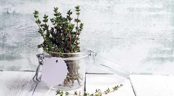 خواص آویشن | طرز تهیه چای آویشن