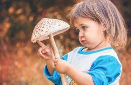 خواص قارچ | قارچ برای سلامتی | مضرات مصرف قارچ