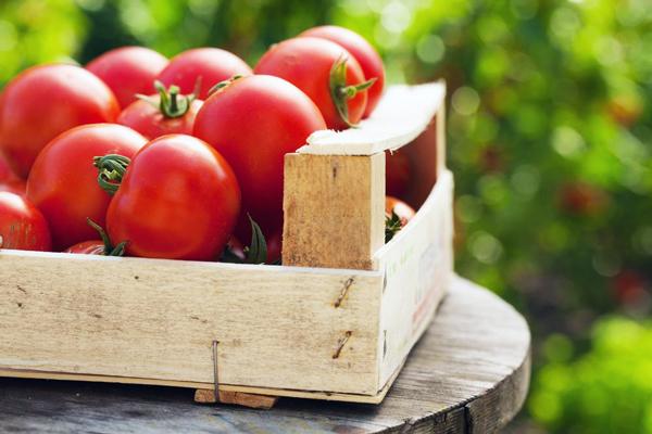 طرز تهیه سس گوجه فرنگی